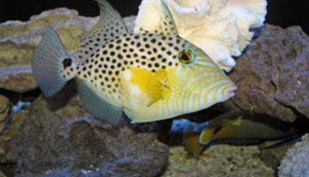 Ocean Design Aquarium