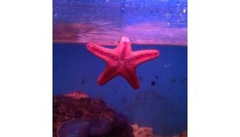 Lucky Ocean Aquarium