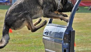 K9 Police Dog Training CALL TODAY for special OFFER