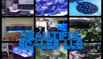 Aquarium and pond maintenance/installation