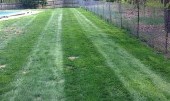 Lawn maintenance and mulch
