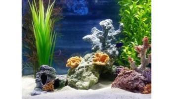 Aquatic Start - Professional Aquarium Maintenance