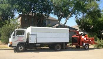 LUSIO's PROFESSIONAL TREE SERVICE
