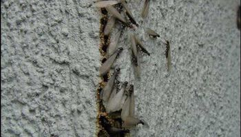 TERMITE INSPECTION TERMITE REPORT TERMITE FUMIGATION