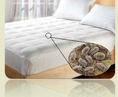 Mattress Cleaning Lowell - prices start at only $25.00