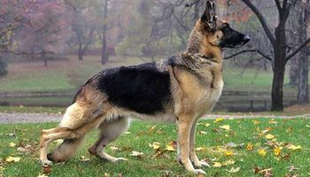 Top Dogs Training and Behavioral Specialist