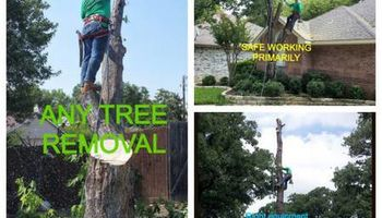 MCKINNEY PLANO ALLEN LOW PRICES CAMPOS TREE SERVICE