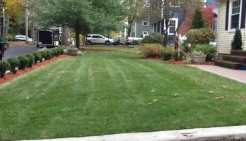 Landscaping service: Lawn Cut & Care