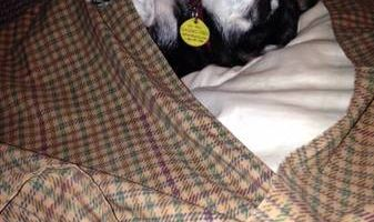 Pet Sitters for Paws