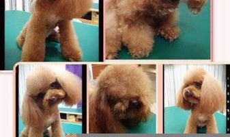 Flip & Cut Pet Grooming
