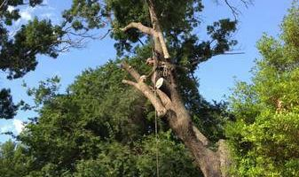 Tree Service 100 % insured and licensed BBB