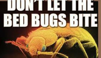 BED BUG REMOVAL - $50 OFF