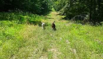 Happy Tails!!! DOG HIKING service in northern Westchester/Putnam Count