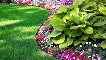 Lawn and Landscape Service (from mowing)
