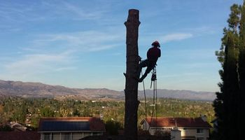 Residential tree service pros