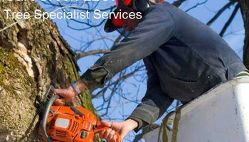 CareGreen LLC. Landscaping Lawn Care, Tree Services & More