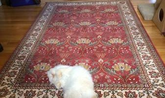 Need Your Rugs Cleaned! Area Rugs and Oriental Rugs Cleaned