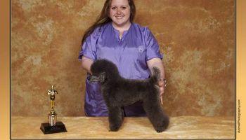 Award Winning Pet Grooming, Creative Grooming, Experienced & Gentle