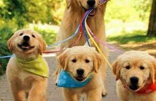 Dog Walker Available