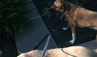 RC Dog Walking/Pet Sitting (Affordable)
