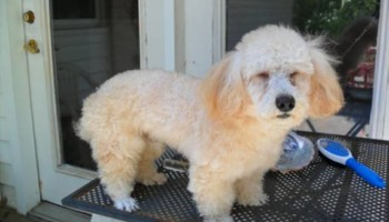 DOES YOUR DOG NEED GROOMING OR A BATH?
