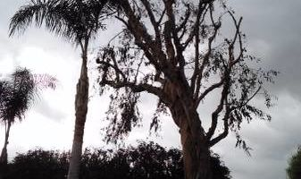 Frank Tree service