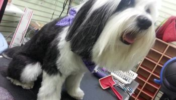 Dog Grooming & Dog Training