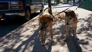 Dogger . BROOKLYN'S FINEST DOG WALKING & PET SITTING
