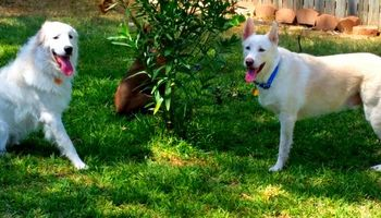 Pet sitter 25$ overnight /15$ daycate