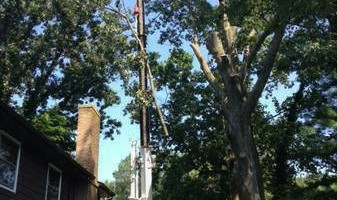 A CUT ABOVE TREE SERVICE OF PA, INC,
