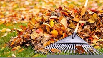 Fall Leaf Cleanups