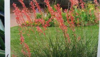 All - Natural Lawn Fertilization $99