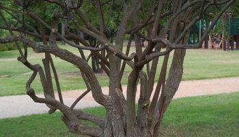 Artemantis Landscape most yards cut for $30