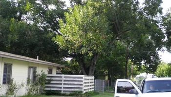 BUDGET FRIENDLY TREE SERVICE!!!!!
