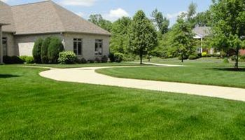 Everything about lawn and tree services - starting $20
