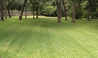 Lawn care done right - mowing, trimming, edging by Coleman