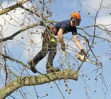 Offering Fall Clean up, tree services