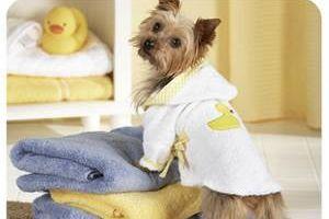 Dog Grooming / Spa Day
