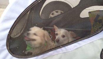 Special needs dog care