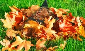 LEAF REMOVAL, FALL CLEAN UP