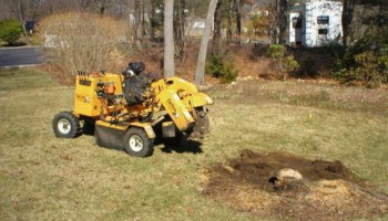 Tree Stump Grinding/Stump Removals. Quality work done at a fair price!