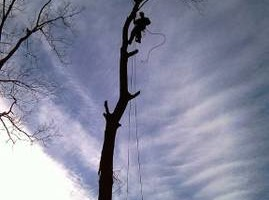 AFFORDABLE ARBORIST SERVICE (tree removals, cabling, crown cleanings)