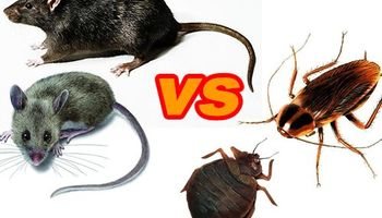 AFFORDABLE EXTERMINATOR - BED BUGS/Roach/Rodent problems