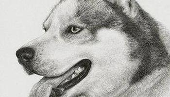 Solving all dog problems Dog Trainer