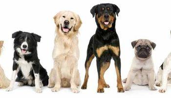 High Tail Dog Walking & Pet Sitting