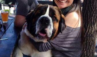 Dog Sitter/Walker!!