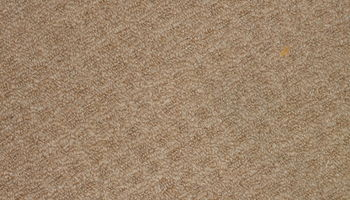 CarpetMuscle - Original Carpetmuscle Carpet Cleaning & Repair - $35