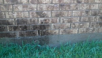 Leaf Cleanup and Landscaping in Mesquite