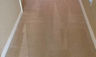 $25 December Special Carpet Cleaning