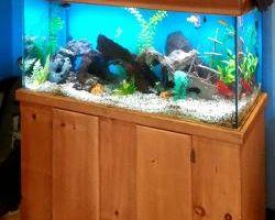 Fishguy Aquariums